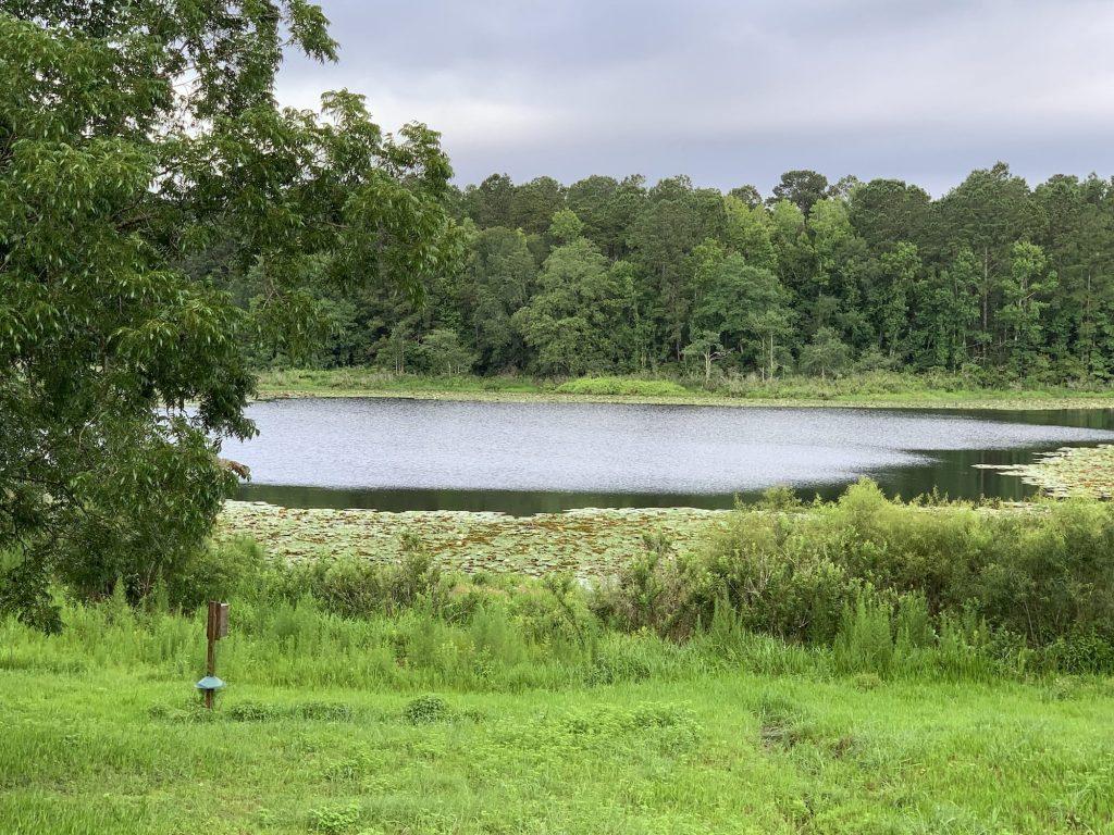 Lake at Southwood